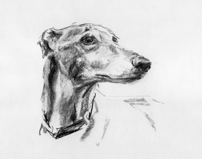 PaintMyDog Modern Contemporary Dog Portraits Pet  : greyhoundsketch from www.paintmydog.co.uk size 658 x 518 jpeg 190kB