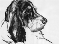 hound profile drawing